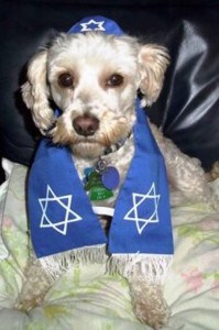 Oliver - Jewish Pet of the Week