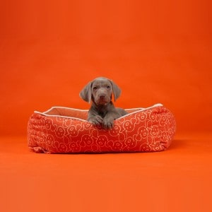 Wegman Dog Eared Bumper Bed_bkgrnd
