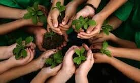 saplings in hands