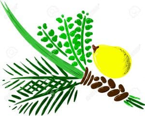 25502762-vector-illustration-of-the-four-species-for-sukkot-jewish-holiday-stock-vector-1