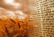 Haver Invites Community to Shavuot